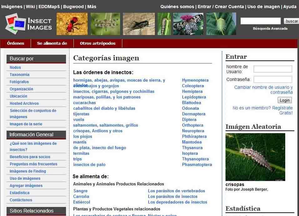 banco de fotos de insectos